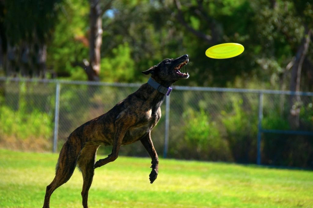 enrichment to help stop destructive dogs