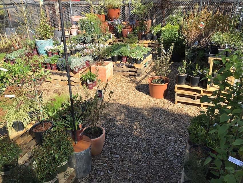 garden-center01