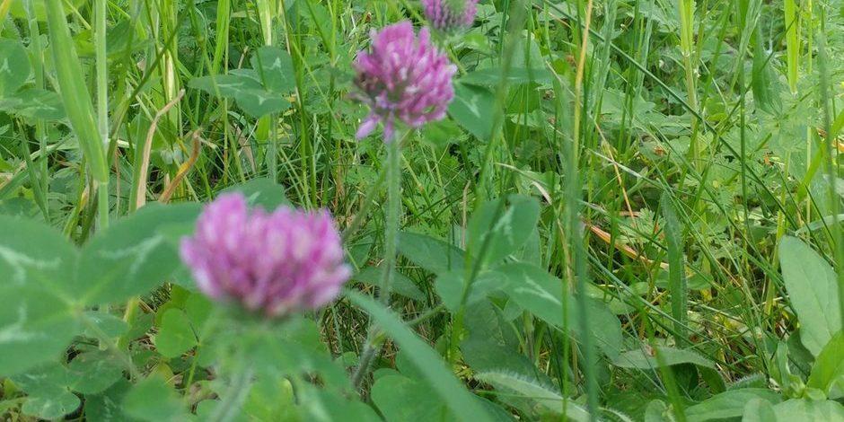 8 weeds