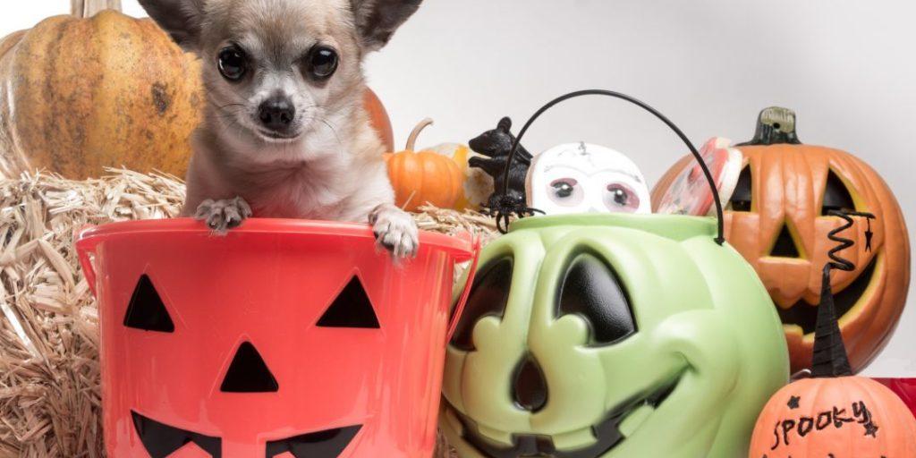 pet events halloween