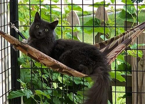 Outdoor hammock for cats